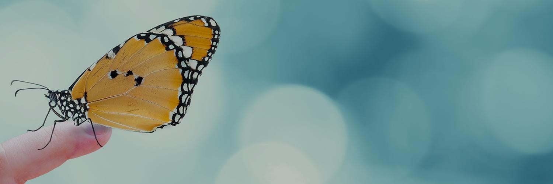 Banner vlinder 2