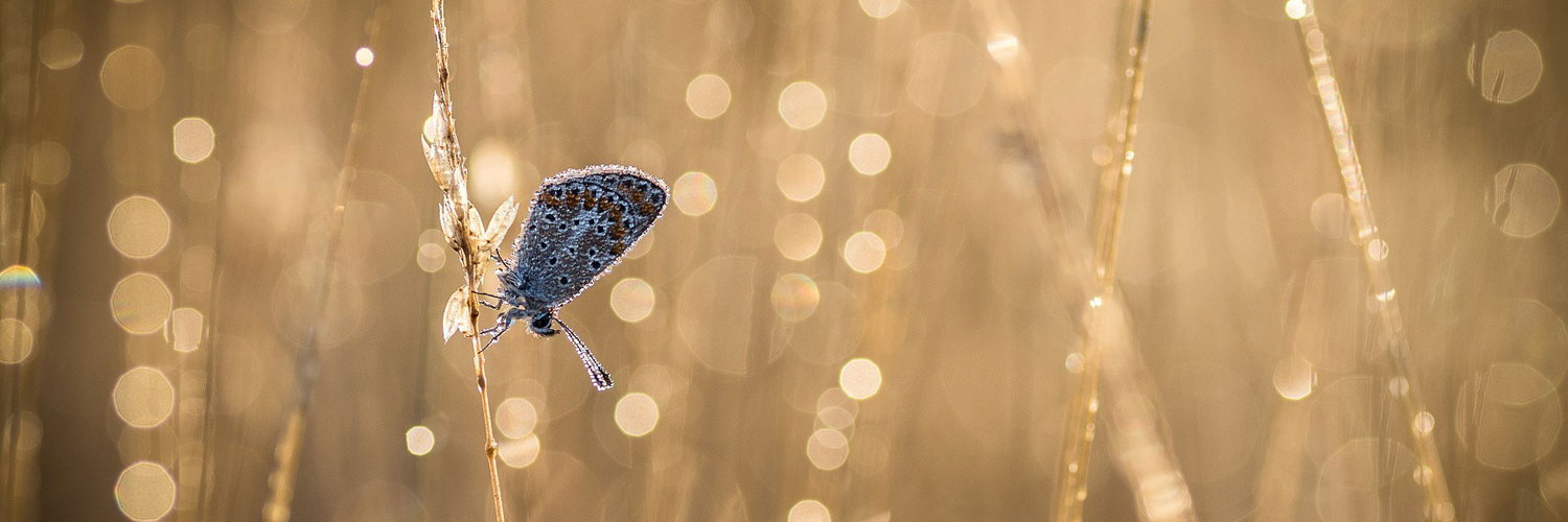 Nature butterfly bokeh l